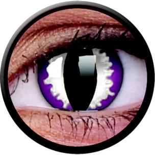 Purple Dragon (Jahreslinse) (1x2)